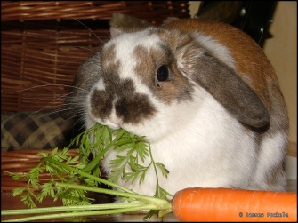 Yes To Carrots