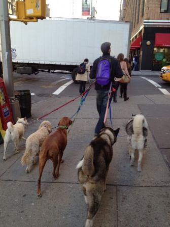 The Culture of Dog Walking